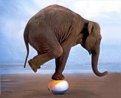 elephant-on-ball